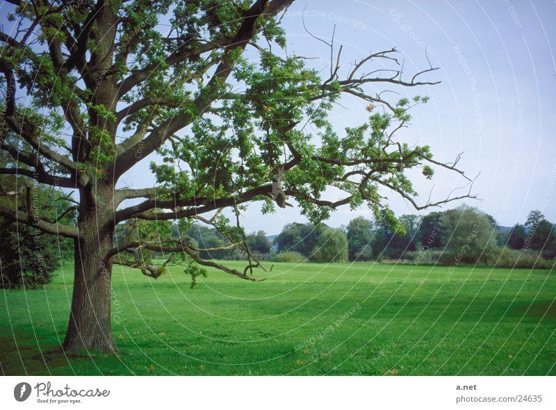 Park von Lenné Baum Brandenburg Untere Oder