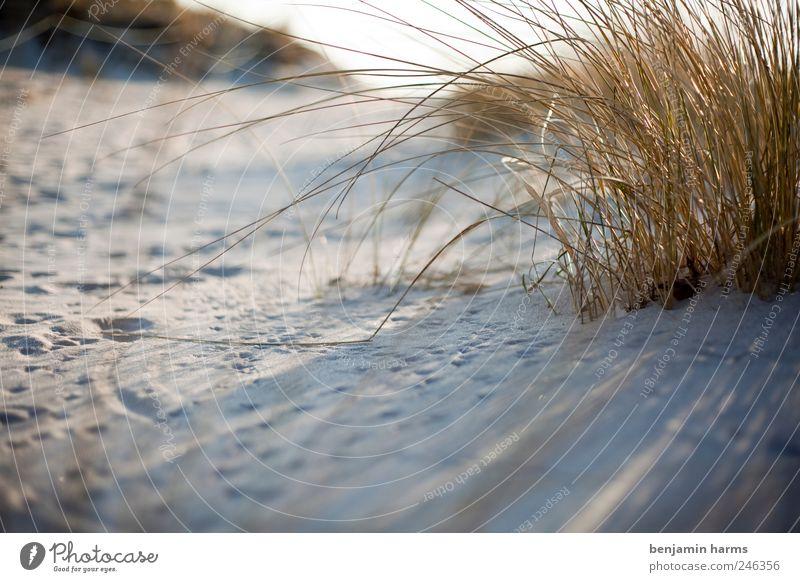 Düne|Baltrum Natur Landschaft Pflanze Erde Sonnenlicht Schönes Wetter Gras Sträucher Küste Strand Nordsee Insel Farbfoto Außenaufnahme Menschenleer