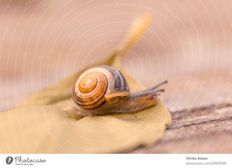 Schneckchen Natur Tier Frühling Sommer Herbst Blatt Schnecke Schneckenhaus Insekt 1 braun Tierliebe Vorsicht Geschwindigkeit Mobilität Ziel Schleichen krabbeln