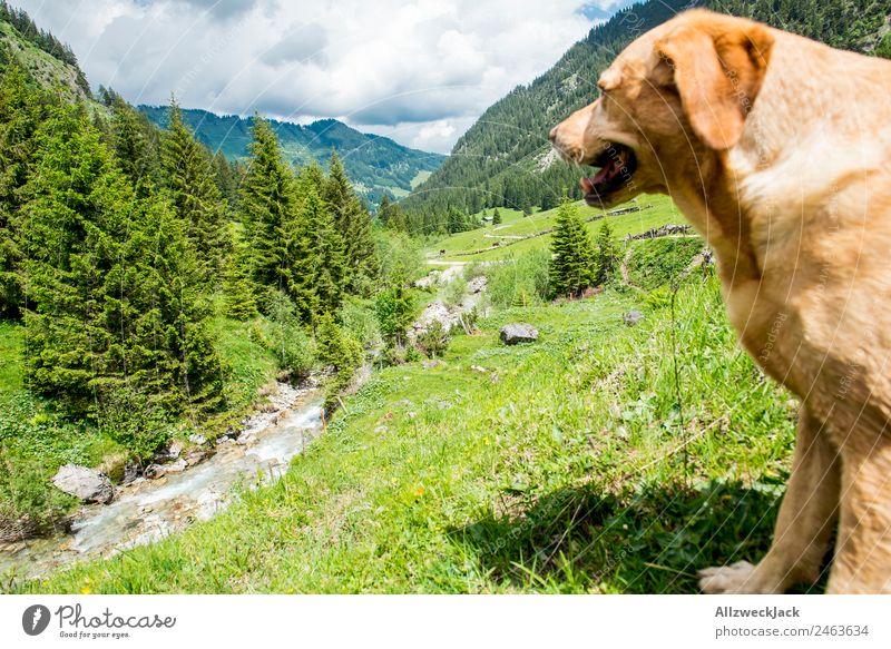 Hund schaut ins Tal von erhöhter Position vor Bergpanorama