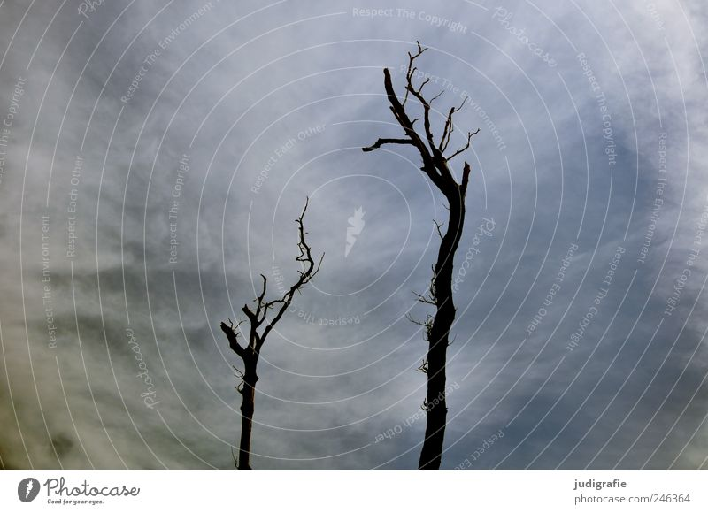 Weststrand Himmel Natur Baum Pflanze Wolken kalt Tod Umwelt Landschaft Küste Stimmung natürlich wild Klima Vergänglichkeit kahl