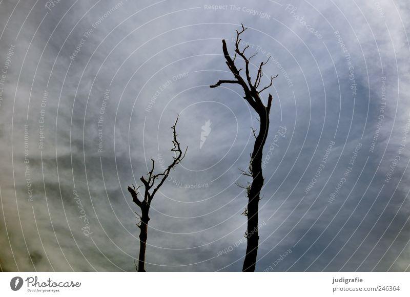 Weststrand Umwelt Natur Landschaft Himmel Wolken Klima Pflanze Baum Küste Darß kalt natürlich stachelig wild Stimmung Tod Umweltverschmutzung Vergänglichkeit