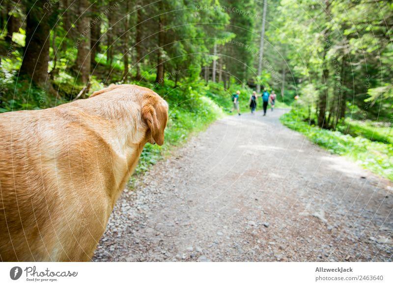 Hund schaut Menschengruppe beim Wandern hinterher