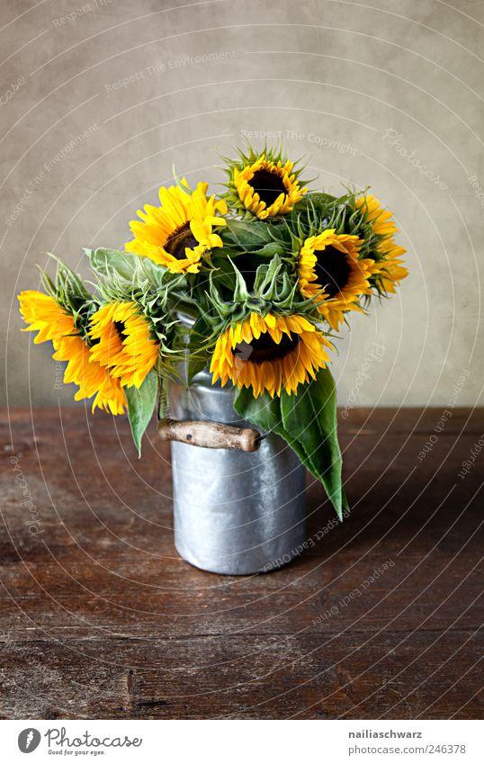 Sonnenblumen Pflanze Blume Blumenstrauß Milchkanne Blechkanne Holz Metall Blühend ästhetisch braun gelb gold silber Farbe Idylle Farbfoto Innenaufnahme