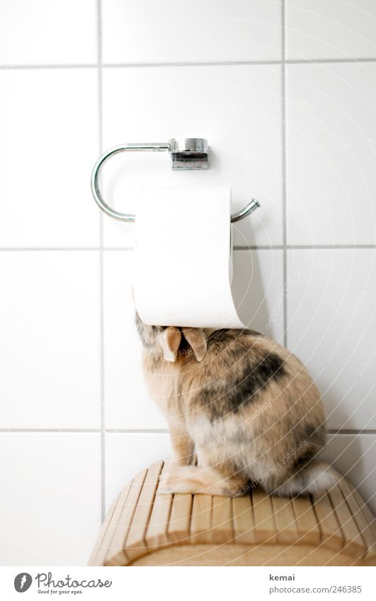 Helmut wird stubenrein weiß Tier Spielen klein Tierjunges Wohnung sitzen Häusliches Leben niedlich Ohr Bad Neugier Fell Fliesen u. Kacheln Hase & Kaninchen Pfote