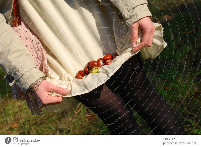 Sterntaler Natur Jugendliche Hand grün schön Erwachsene Herbst feminin grau Gras Glück träumen braun Zufriedenheit natürlich