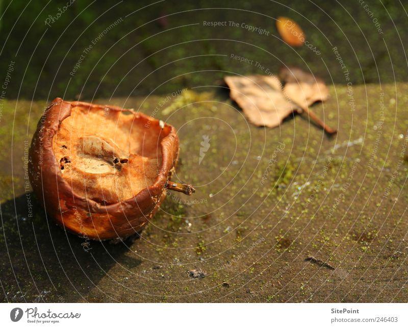 Überreif Natur alt Sommer Blatt Tod Ernährung Lebensmittel Garten Frucht verfaulen Apfel trocken Verfall Fressen dehydrieren Abendsonne