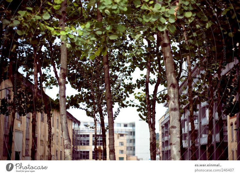 urban meets nature Natur Baum Blatt Haus dehydrieren