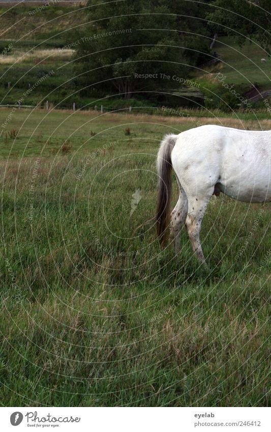 Hinten Natur weiß Baum grün Pflanze Sommer Tier Wiese Gras Landschaft grau Umwelt Wetter Freizeit & Hobby Pferd Sträucher