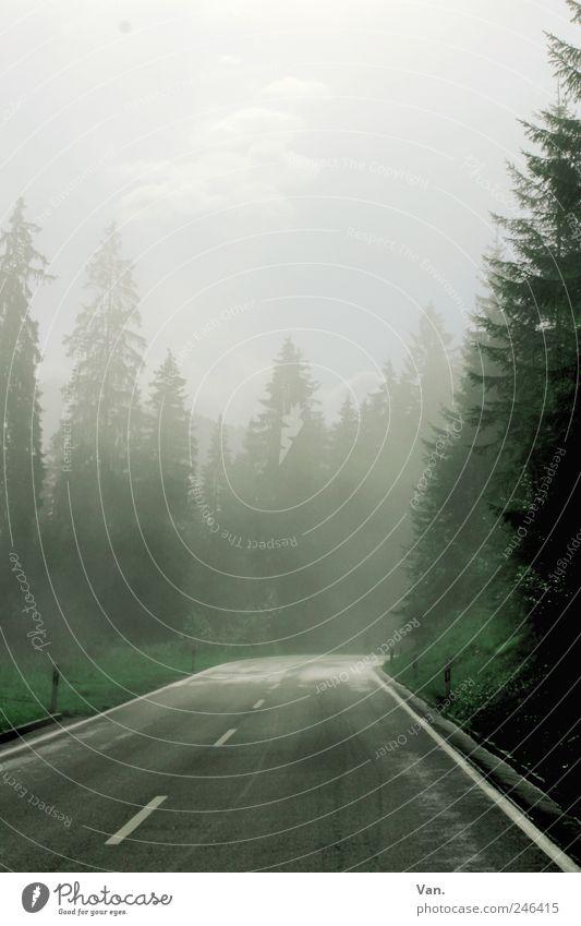durch den Nebel Himmel Baum grün blau Pflanze Wolken Straße Wald kalt Berge u. Gebirge grau laufen nass wandern Ausflug