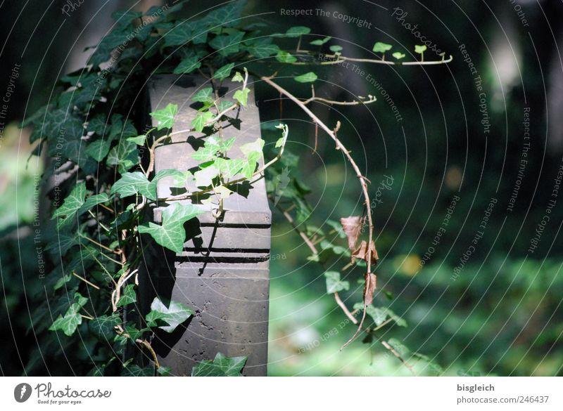 schöne letzte Ruhe alt grün Pflanze ruhig Tod grau Stein Religion & Glaube Ziel Gelassenheit Friedhof Grünpflanze Grabstein Mensch Bestatter
