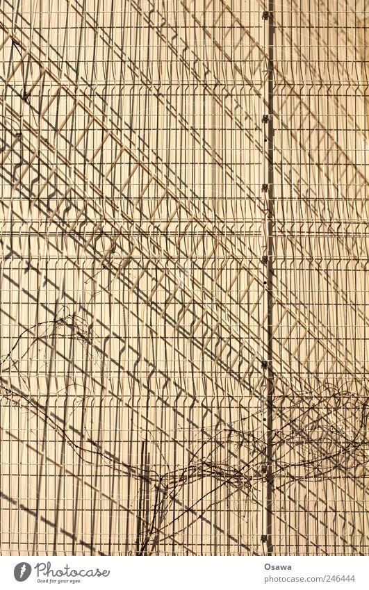Gitter Pflanze Wand Hintergrundbild diagonal Draht Doppelbelichtung Gitter beige Raster Ranke Drahtgitter