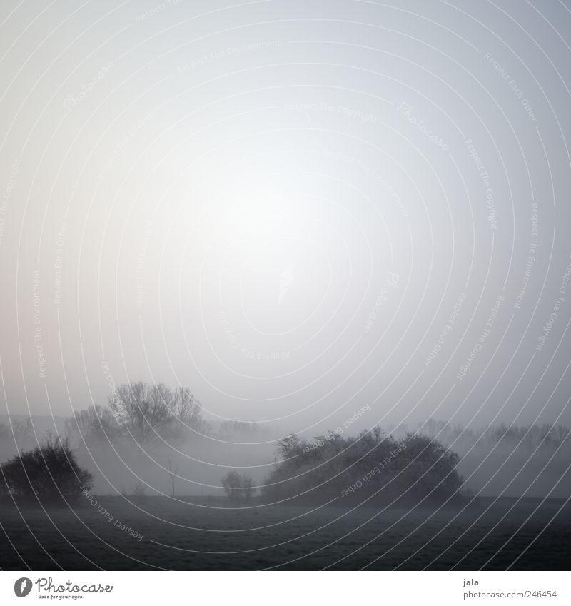 nebelmorgen Himmel Natur Baum Pflanze Gras Landschaft grau Umwelt Nebel trist natürlich Sträucher Grünpflanze Wildpflanze
