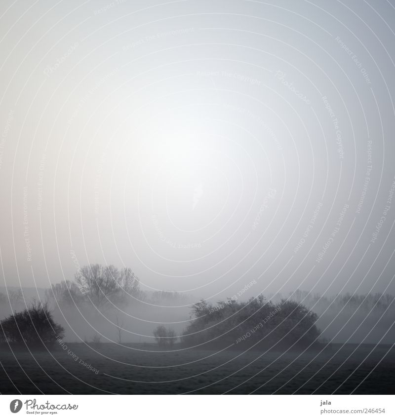 nebelmorgen Umwelt Natur Landschaft Himmel Nebel Pflanze Baum Gras Sträucher Grünpflanze Wildpflanze natürlich trist grau Gedeckte Farben Außenaufnahme