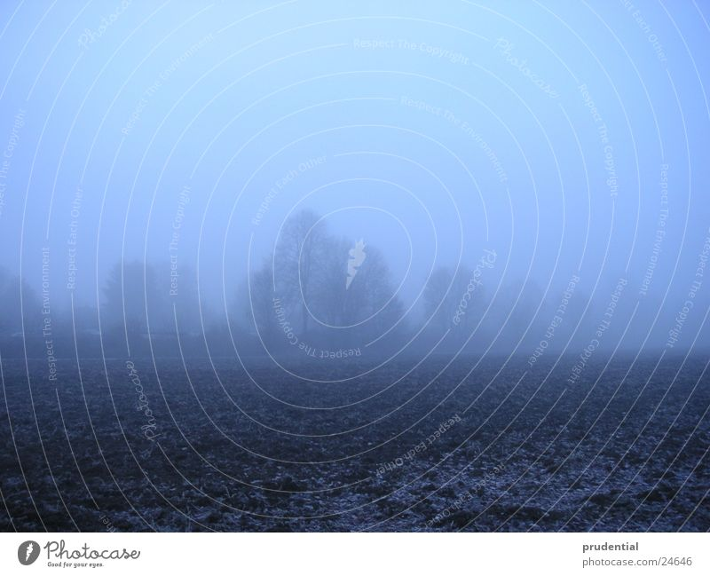 wintermorgen Winter kalt Nebel laublos Baum Raureif