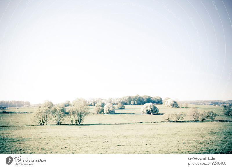 Das Dorf der Tribbles Umwelt Natur Landschaft Pflanze Erde Luft Himmel Wolkenloser Himmel Horizont Sommer Schönes Wetter Baum Gras Sträucher Grünpflanze Wiese