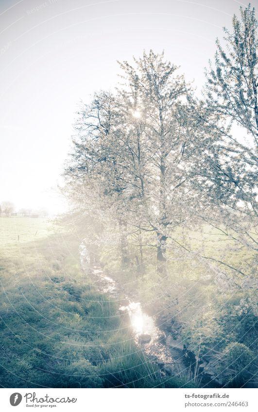 Morgenzauber Umwelt Natur Landschaft Urelemente Luft Wasser Himmel Sonnenaufgang Sonnenuntergang Schönes Wetter Nebel Pflanze Baum Gras Feld Bach natürlich grün