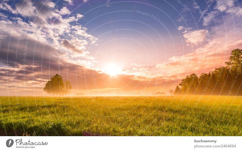 Sonnenaufgang im Schwarzwalf Ferien & Urlaub & Reisen Tourismus Ausflug Freiheit Sommer wandern Natur Landschaft Pflanze Tier Himmel Wolken Sonnenuntergang