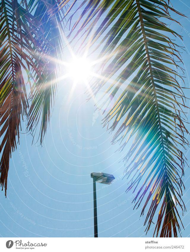 Urlaubszeit Baum Sonne Sommer Ferien & Urlaub & Reisen heiß Laterne Palme exotisch Schönes Wetter Wolkenloser Himmel Palmenwedel