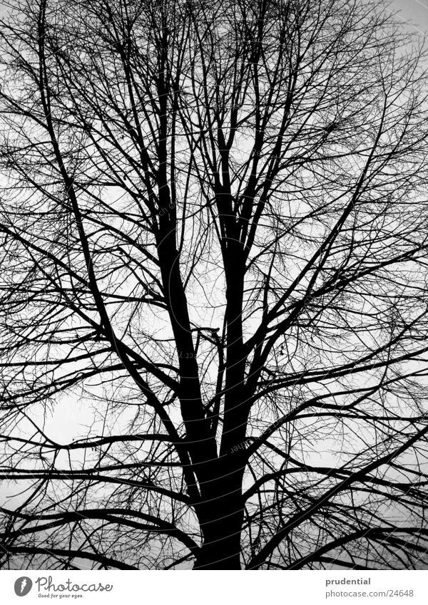 winterbaum Baum Winter Schwarzweißfoto