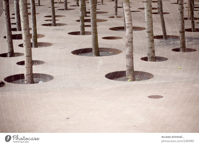 eingesperrt Baum Wachstum Kreis gefangen graphisch