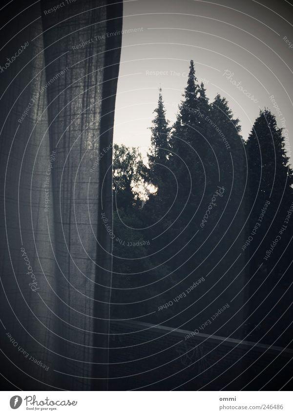 Da draußen Baum Wald dunkel Fenster trist Häusliches Leben Stoff einfach Vorhang Fensterscheibe