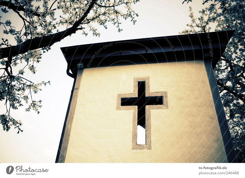busstop to heaven? Baum Pflanze Wand Stein Gebäude Religion & Glaube Beton Kirche Dach Zeichen Kreuz Christentum Jesus Christus Kapelle Bushaltestelle