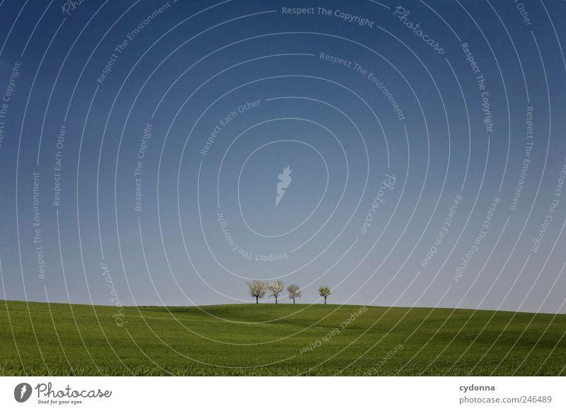 Wenn die Welt nur so einfach wäre Natur schön Baum Sommer Einsamkeit ruhig Ferne Erholung Umwelt Landschaft Leben Wiese Freiheit Gras Frühling träumen