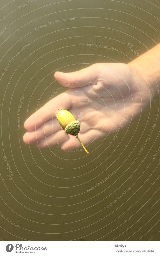 Treibgut Mensch Natur Wasser Hand ruhig natürlich Spielen außergewöhnlich Schwimmen & Baden See träumen offen Kindheit Freundlichkeit berühren Neugier