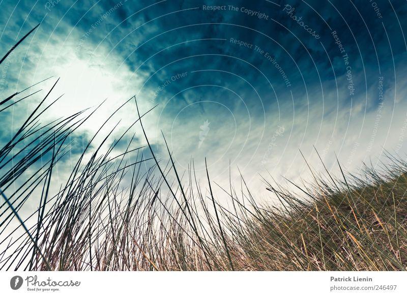 Sometimes I feel like Himmel Natur blau schön Pflanze Sommer Ferien & Urlaub & Reisen Meer Wolken Ferne Freiheit Umwelt Landschaft Luft Wetter Wellen