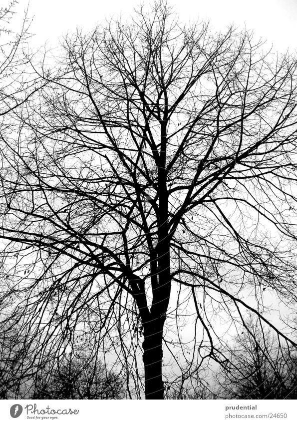 winterbaum Baum Winter