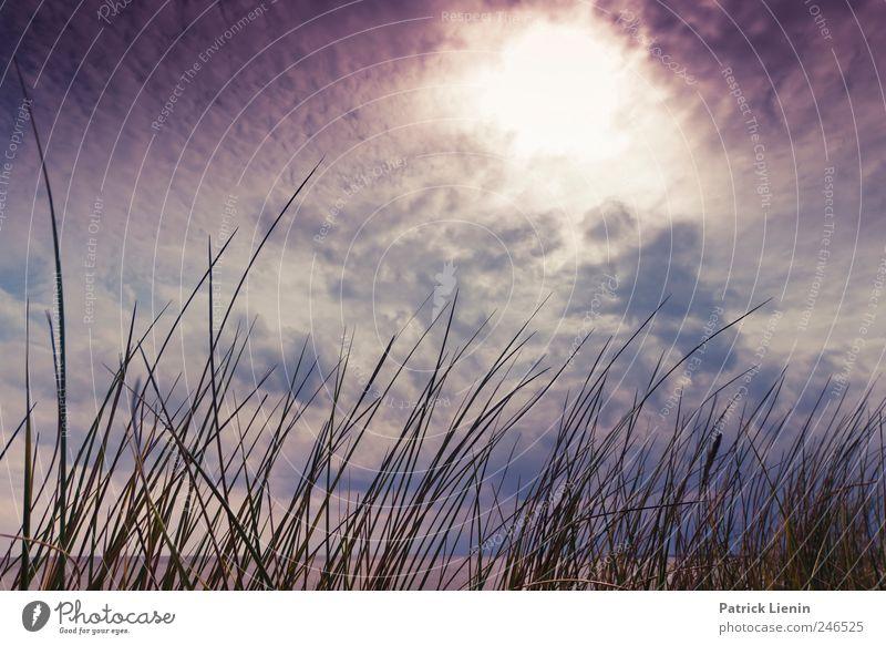 get lost get lost Himmel Natur blau schön Pflanze Sommer Ferien & Urlaub & Reisen Meer Wolken Ferne Freiheit Umwelt Landschaft träumen Luft Wetter