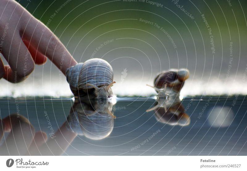 Los! Schneller! Mensch Natur Wasser Hand Sommer Tier Umwelt hell Kindheit nass Finger natürlich Wildtier Urelemente Schnecke krabbeln