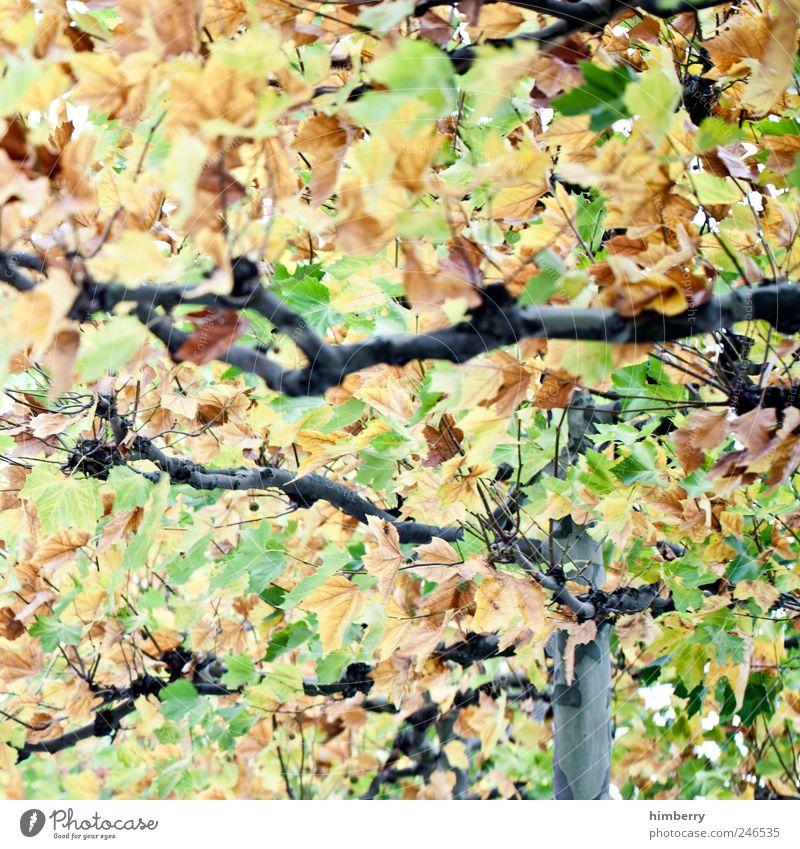 leaf salad Natur grün Baum Blatt Wald gelb Herbst Umwelt Freiheit Landschaft Park Kunst Zufriedenheit Freizeit & Hobby Zeit Design
