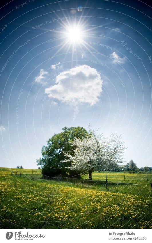Frühlingsboten Umwelt Natur Landschaft Urelemente Luft Himmel Wolken Sonnenlicht Schönes Wetter Baum Gras Blüte Wiese schön blau grün Umweltschutz Blumenwiese