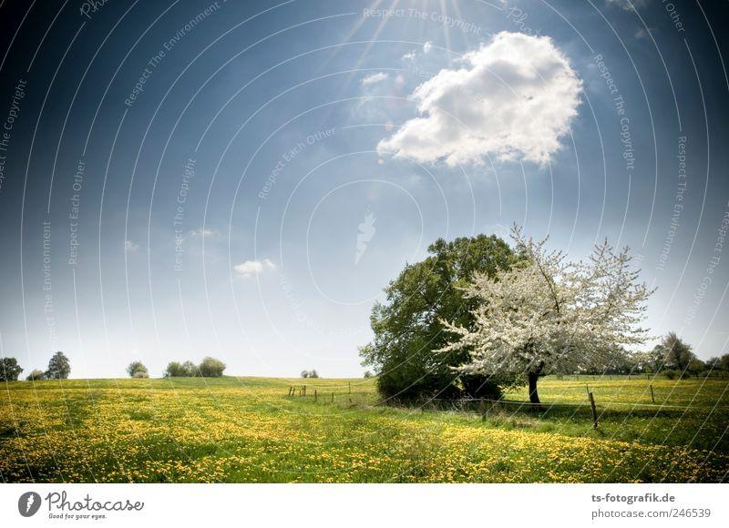 Frühlingsboten II Umwelt Natur Landschaft Pflanze Himmel Wolken Horizont Sonnenlicht Schönes Wetter Baum Gras Blüte Wiese natürlich schön blau gelb grün