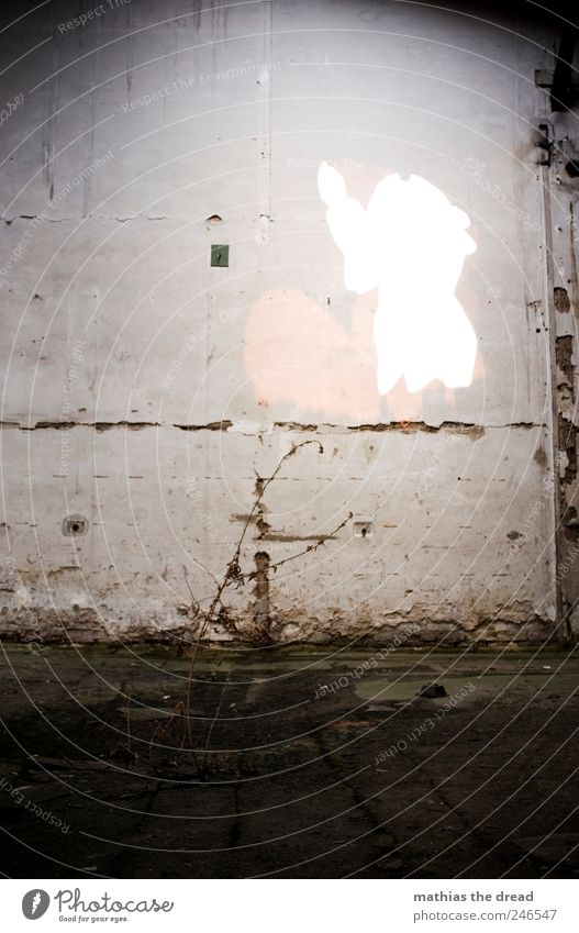 TROSTLOS alt schön Pflanze kalt Wand Tod Stil Mauer Gebäude trist Sträucher außergewöhnlich Vergänglichkeit Fabrik Idylle Bauwerk
