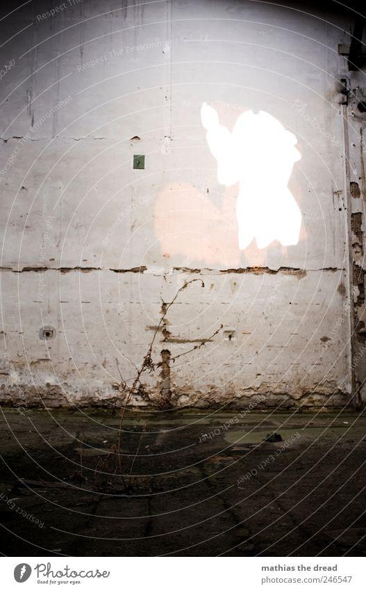TROSTLOS Pflanze Sträucher Menschenleer Industrieanlage Fabrik Ruine Bauwerk Gebäude Mauer Wand alt außergewöhnlich schön trashig trist Endzeitstimmung Idylle