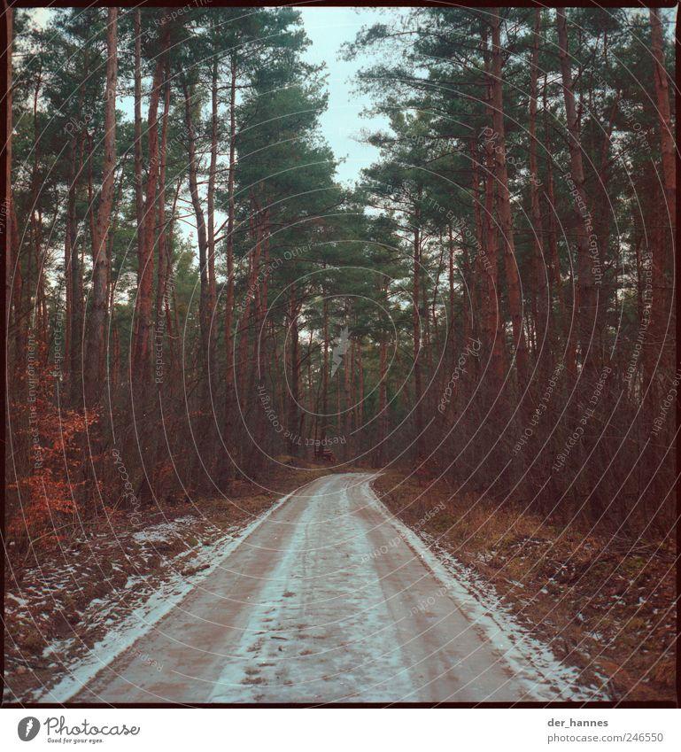 Zahnstocherschlucht Natur Baum Winter Wald Schnee Landschaft Wege & Pfade Umwelt Angst wandern Trauer bedrohlich Todesangst schlechtes Wetter Wolkenloser Himmel Nutzpflanze