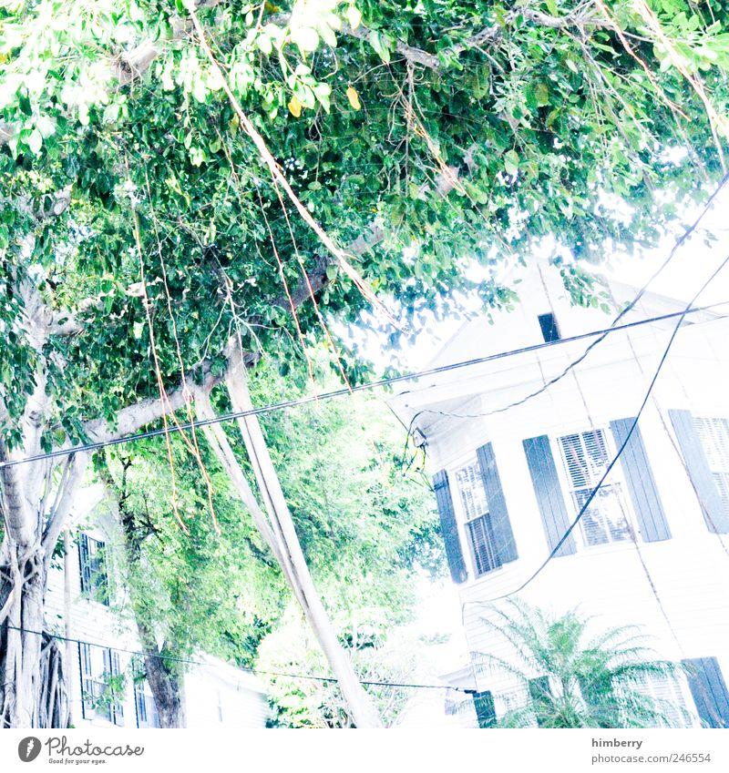 tatort irene Natur Ferien & Urlaub & Reisen weiß Baum Haus Fenster Umwelt Stil Gebäude Kunst Garten Fassade hell Park Idee Dach