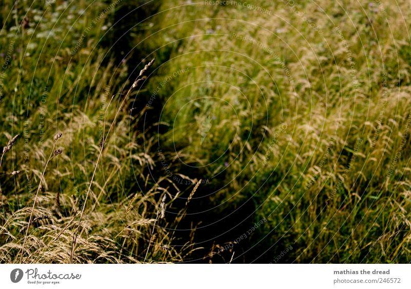DÄNEMARK - XIX grün schön Pflanze Gras Wege & Pfade Sträucher Moos Schönes Wetter
