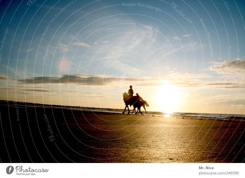 cowboys on dope Himmel Natur Sonne Sommer Strand Meer Ferien & Urlaub & Reisen Wolken Freiheit Landschaft Glück Umwelt Küste Ausflug Abenteuer Pferd