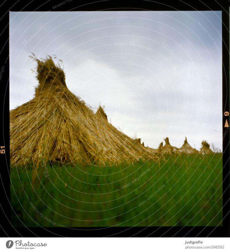Am Bodden Himmel Natur grün Pflanze Sommer Wolken Wiese Landschaft Gras Umwelt Stimmung natürlich Schilfrohr Material Darß trocknen