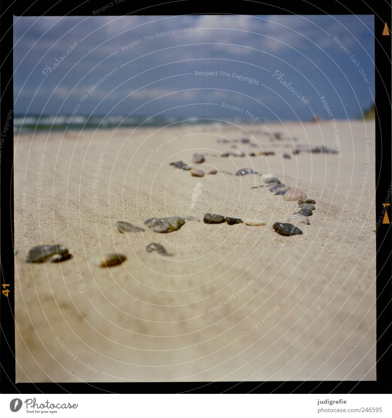 Ostsee Umwelt Natur Landschaft Sand Küste Strand Stein natürlich Linie Schlangenlinie Farbfoto Außenaufnahme