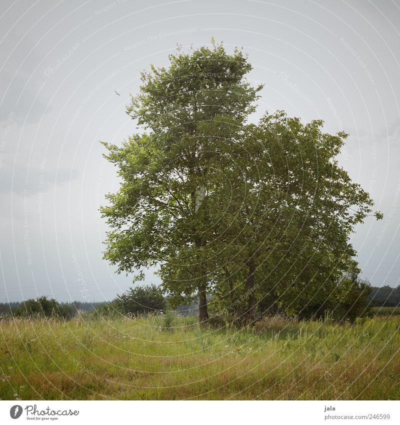 natur Umwelt Natur Landschaft Pflanze Himmel Baum Gras Sträucher Grünpflanze Wildpflanze Wiese natürlich blau grün Farbfoto Außenaufnahme Menschenleer