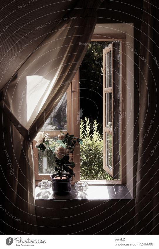 Kunstblume Pflanze Sommer Blume Wand Fenster Garten Stil Mauer hell Wetter Wohnung elegant Design Klima offen Lifestyle