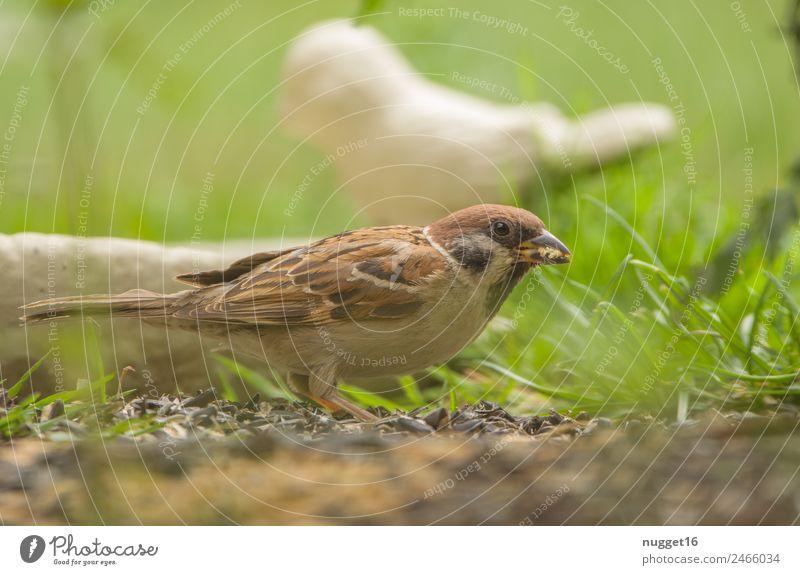 Sperling Natur Sommer Pflanze grün weiß Tier Wald gelb Umwelt Herbst Frühling Wiese Gras Garten Vogel orange