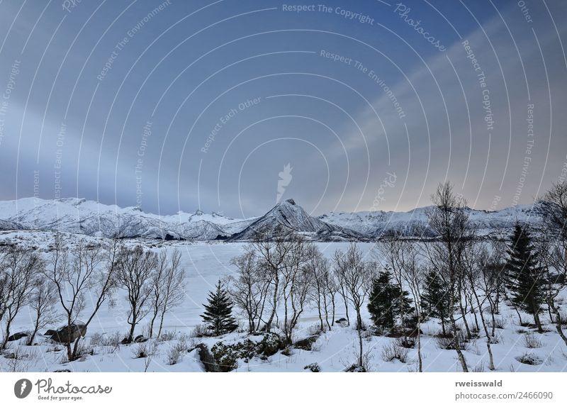 Himmel Natur Ferien & Urlaub & Reisen blau Pflanze schön grün Landschaft weiß Baum Erholung Einsamkeit Wolken ruhig Winter Wald