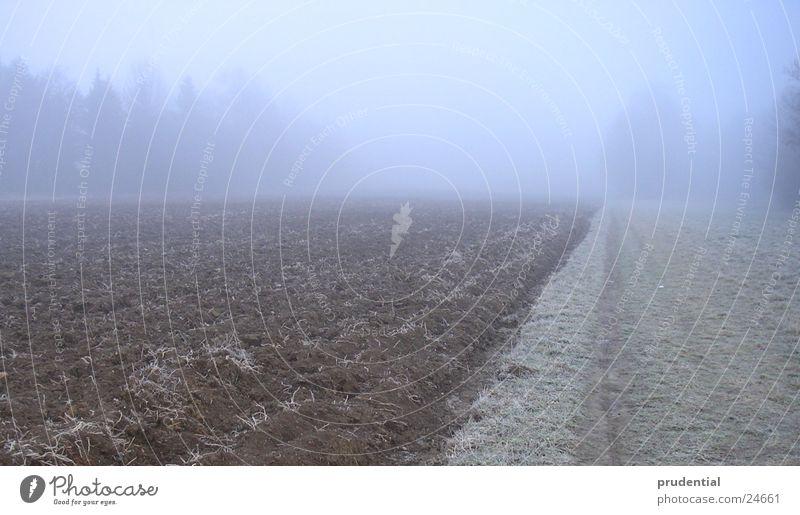 herbstimpression Herbst Trauer Traurigkeit nebel.grau blau