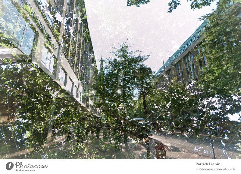 urban jungle Mensch Himmel Natur grün Stadt Baum Pflanze Wand Freiheit Umwelt Landschaft Mauer Stimmung Freizeit & Hobby Platz natürlich